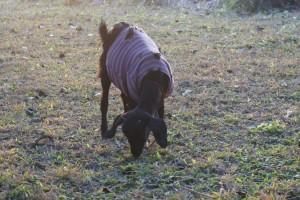 January goat